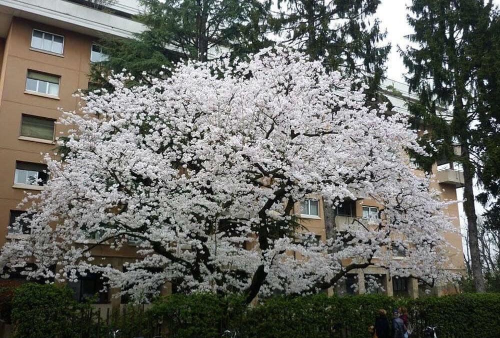 L'Arrivo della Primavera